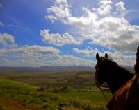 relaxing riding holidays for pleasure lover at the farmhouse Poggio Nebbia close to Rome