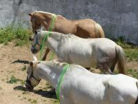 Riding Vacations-Communication Training with Horses in Cortijo Las Piñas, Tarifa, Andalusia, Spain!