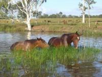 Susan River Homestead Adventure Resort - Horse riding adventure holiday in Queensland Australia