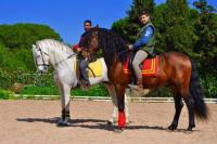 Finca El Anfora: Spanish High School Riding and rides between pinewoods and beaches in Andalucia