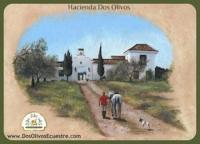 Horse Riding and Equestrian Activities in Rural Andalusia