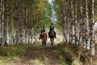Ride Lapland...     horseback through the north of Europe
