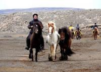 Nupshestar - Riding Tours, 3 Day Tours in the Heart of Iceland, Sheep roundup, Landmannalaugar