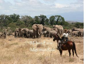 The experience of a lifetime: Migration Ride