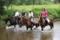 Tailor made riding programs for experienced and novice riders, country accommodation and cuisine