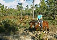 Horseback riding in Florida