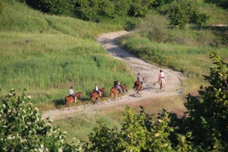 Husar Riding Center in Slanic Prahova / All Regions