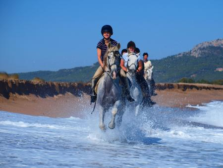 Holiday Company, Training Company, Horse Trekking Station, Dude/Guest Ranch, Ranch with Winter Snow Activities, Farm, Riding Stable, B & B for Horsemen, Hotel for Horsemen in Terradelles