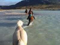 Horseriding Vacations in Narsaq, Greenland! Riding Greenland!