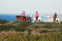 Horse Adventure Tours- Riding tours in the nature reserve of the Costa Vicentina, West Algarve, Port