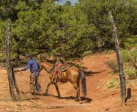 Private Ranch Stay vacations on the M Diamond Ranch, a working cattle ranch near Sedona Arizona