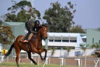 Racing/Horsemanship Internship in Zimbabwe, Africa for minimum of 2 week period.
