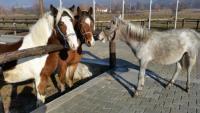 Nora's Ranch - Horseback Riding Vacations in Kicevo / Ohrid,  Macedonia!