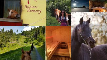 Holiday Company, B & B for Horses, Training Company, Horse Trekking Station, Dude/Guest Ranch, Ranch with Winter Snow Activities, Riding Stable, Pony Stable, B & B for Horsemen, Western Riding Stable, Children's Holiday Company, Hay Hotel, Campground / Campsite in Hummeltal