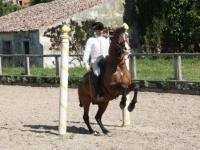 Santo André Lusitanos - Horseback Riding Vacations - Riding Lessons near Lisbon, Portugal!