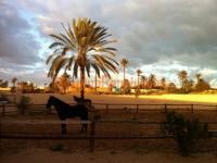 Mezraya Ranch - Horseback Riding Vacations in Tunisia, Djerba!