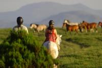 Ecotura - Horseback riding holidays in Peneda Gerês National Park, Portugal!