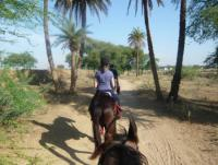 Horseback Riding in India, trail rides through rural Rajasthan on the indigenous Marwari Horse.