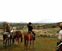 Arusha Tanzania - Kilimanjaro climbing and Horse riding stable grounds