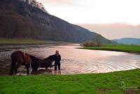 pferde au pair