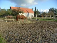 Freie Boxen bei Spezialbetreuung auf kleinem Hof im Havelland
