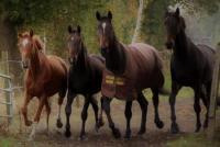 Schöne helle Pferdeboxen im Ammerland frei. Paddock- und Fensterboxen.