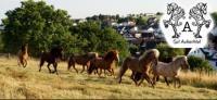 Islandpferdegut Aubachtal - Pferdepension mit Leidenschaft & Herz in Oberraden, Rheinland-Pfalz