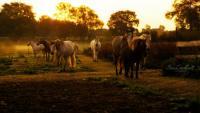 Pferdegerechtes Leben im Aktivstall mit Reithalle und 2 Reitplätzen