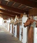 Boxen und Paddock boxen auf der CC Ranch erhältlich