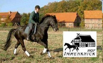 Holiday Company, B & B for Horses, Tournament Company, Breeding Company, Dude/Guest Ranch, Farm, Riding Stable, Pony Stable, B & B for Horsemen, Children's Holiday Company, Hotel for Horsemen in Hitzacker