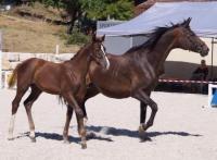 atble work, horse care