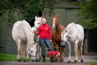 Internship in the Academic Art of Riding in Denmark