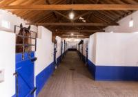 Riding holidays at Lusitano Royal Stables in Portugal  30 minutes north from the Lisbon airport