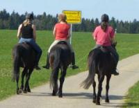 Horse riding holidays and weekends for children over 10 years in Dinkelsbühl, Franconia, bavaria