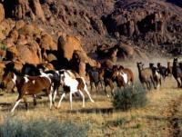 Horseback Riding Vacation in Namibia - as well as training of young horses