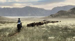 Cattle rounding