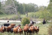 Welcome to Parkland Ranch in the Wild Heart of Canada!