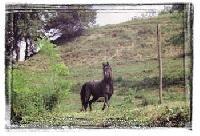 Centro Ippico San Bovo - Horseback riding holidays in Southern Piedmont - Italy!