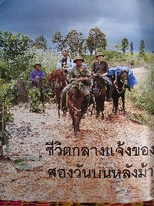 Thai Horse Farm Co. Ltd. in Phrao - Chiang Mai / further Regions