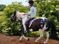 Pferdehof Steinhauser - Gentle Horse - bitless Riding & Natural Horsemanship lovely Bavaria Germany