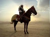 Horsetrekking into the Tunisian Sahara with BedouinCavalier Abderrahim ben Abdelmalek