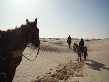Sahara Circuit in Douz / All Regions