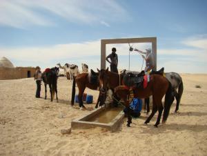 Horse & dromedary trek SAHARA CIRCUIT