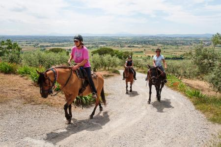 Holiday Company, Horse Trekking Station, Farm, Riding Stable in Cortona