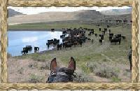 Bar Lazy J Colorado Dude Ranch -  a true 'Western Experience' in Colorado!