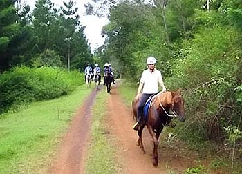 Mary Valley Adventure Trails in Sunshine Coast Hinterland.  Near Noosa. / Queensland