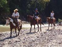 Healthy quality horses on nature trails in Mexicos Sierra Madre mountains. Three hours to Six days !