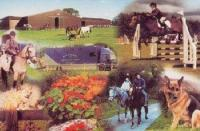 Riding holidays at the Annaharvey Farm Equestrian Centre & Guesthouse in Ireland near Tullamore