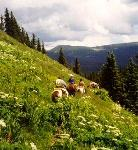 Circle S Riding Stables - Guided Trail Rides - Horseback Riding Vacations in New Mexico, USA!