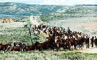 Annual Horse Drive/Roundup at  working ranch in Craig Colorado or year-round trail rides at stables